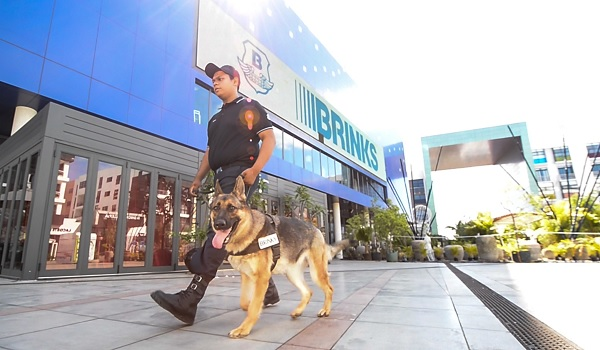 Brinks.io-manned-security-dog-handler-mauritius